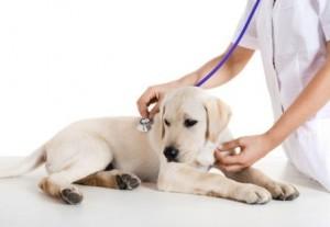 chiot-veterinaire-examen-sante